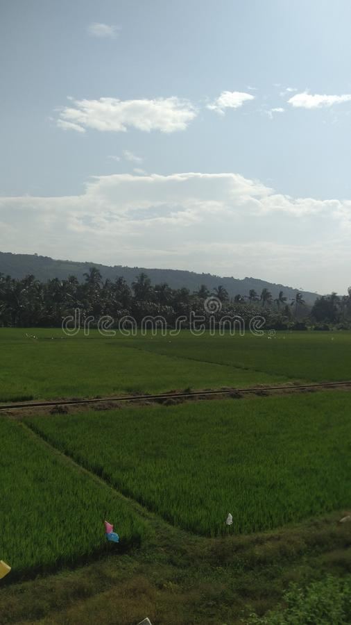 Kerala verde foto de archivo