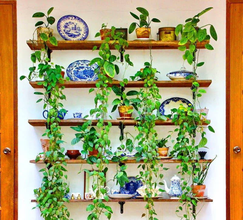 Keramisch mit grünem Efeu, zeitgenössischer Gartendekor stockfotos