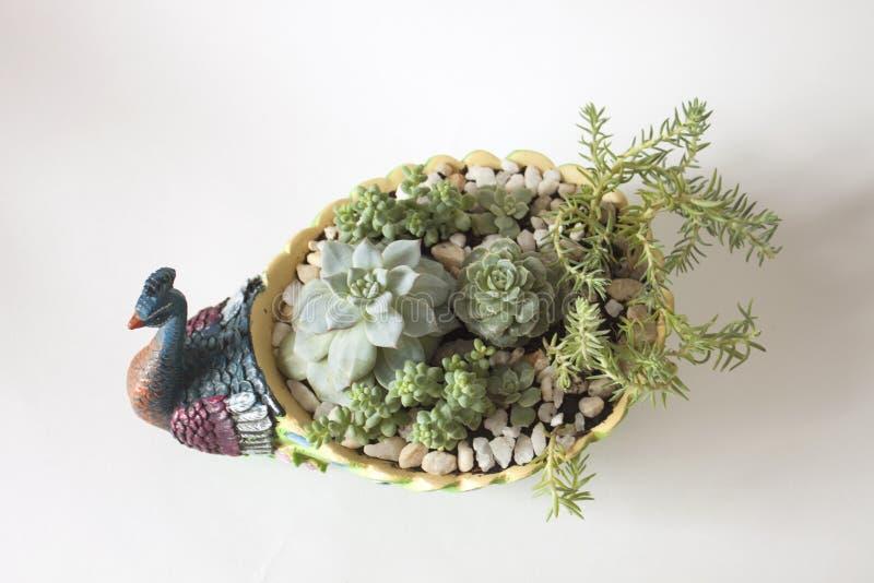 Keramischer Blumentopf in Form eines Pfaus stockfotos