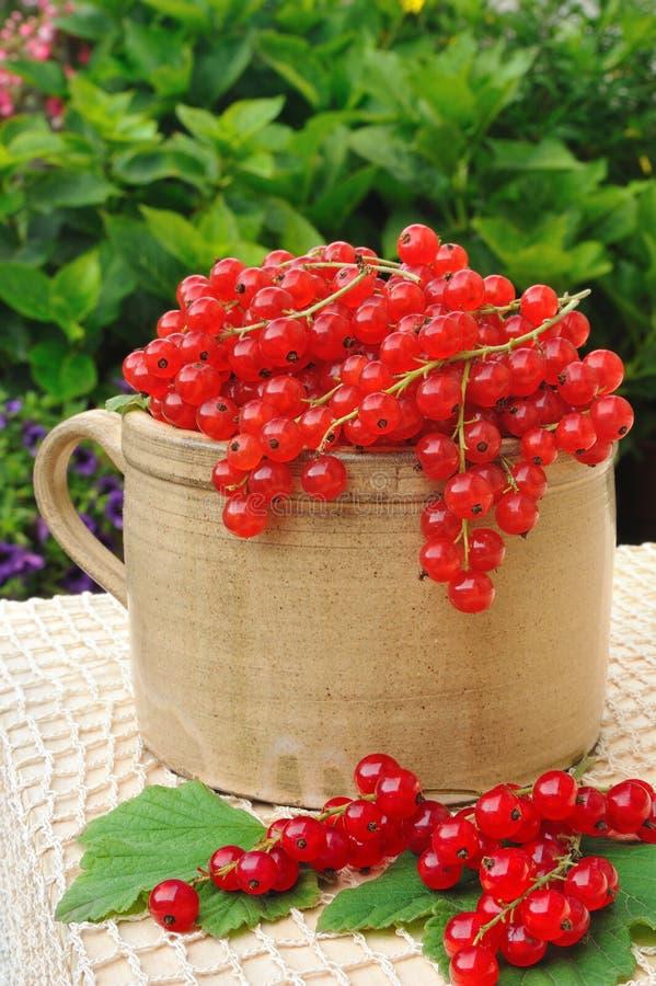 Keramisches Cup voll von den frischen rote Johannisbeerbeeren lizenzfreie stockfotografie