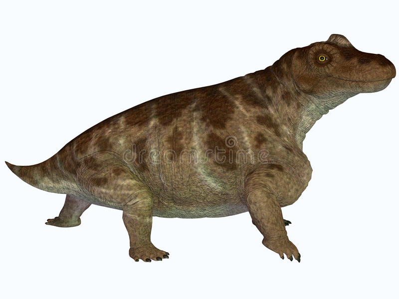 Keratocephalus on White. Keratocephalus was a semi-aquatic herbivore dinosaur that lived in the Permian Age of Africa vector illustration