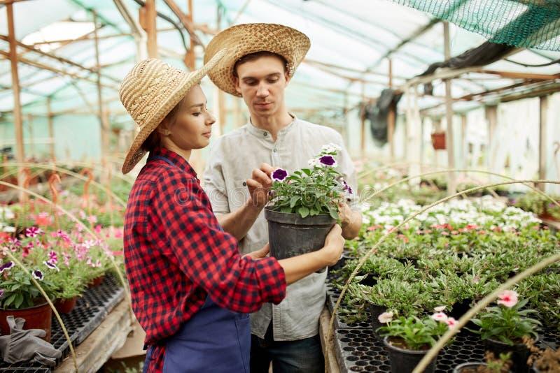 Kerel en meisjes de tuinlieden in een strohoeden houdt en bekijkt de pot met bloem in serre op een zonnige dag royalty-vrije stock afbeeldingen