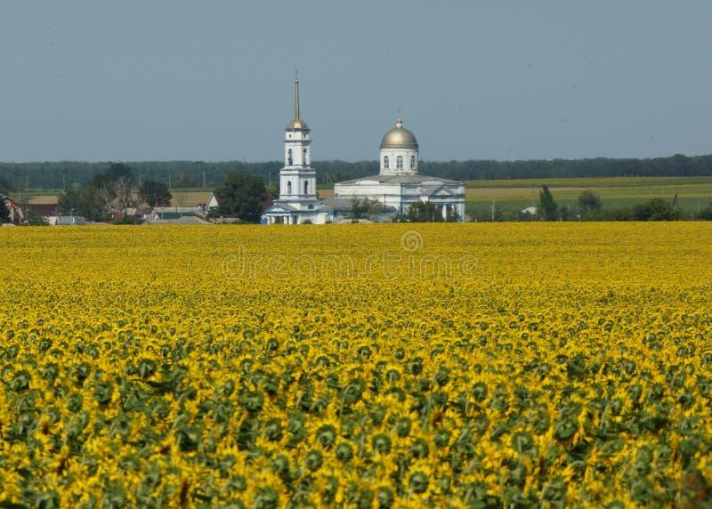 Kerk achter het zonnebloemgebied stock foto