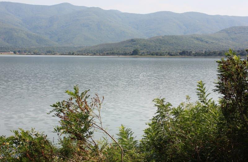 Kerkini塞雷希腊湖  免版税图库摄影