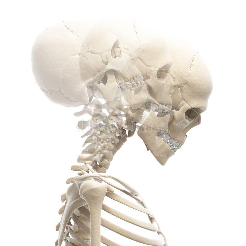 Kerl, der seinen Hals verbiegt vektor abbildung