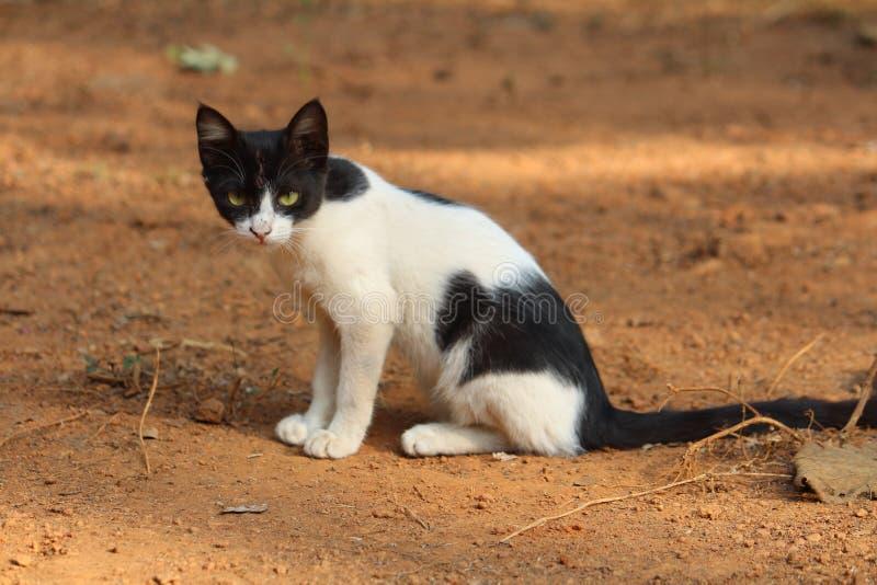Kerla by av den djura katten arkivfoto