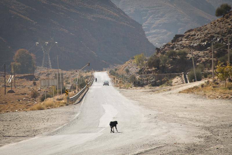 Lut Highway