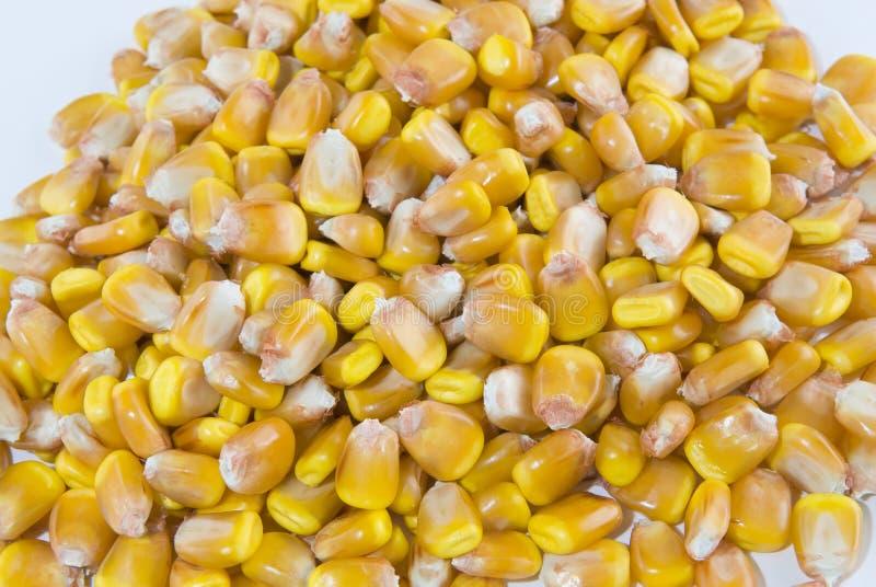 Kerne von Mais in einem Stapel lizenzfreies stockfoto