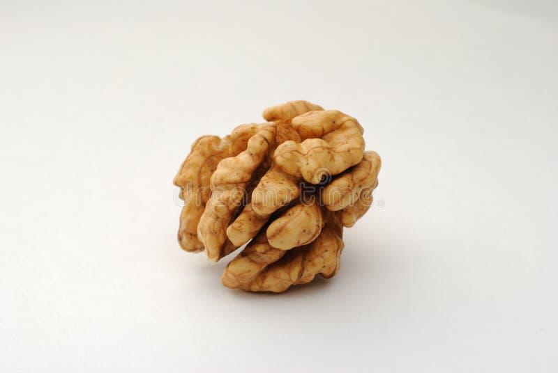 Kernel of circassian walnut royalty free stock photography