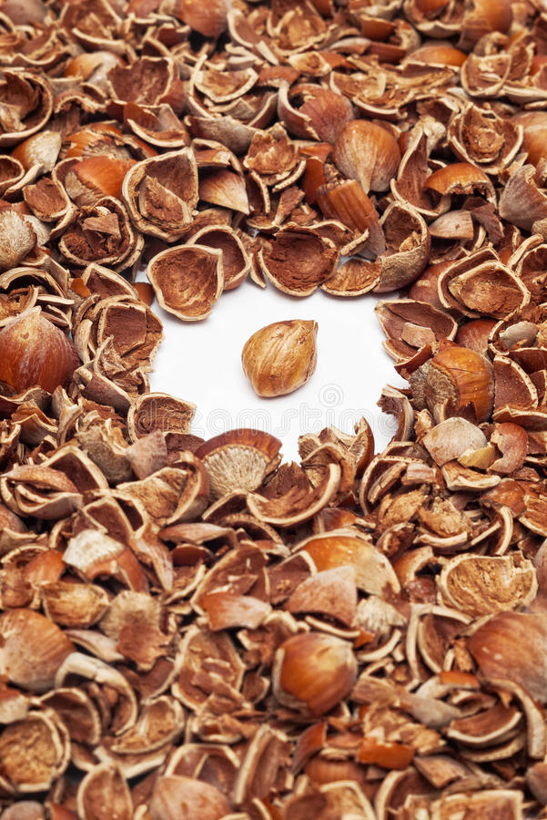 Download Kernel and nutshells stock photo. Image of many, peeled - 18508464