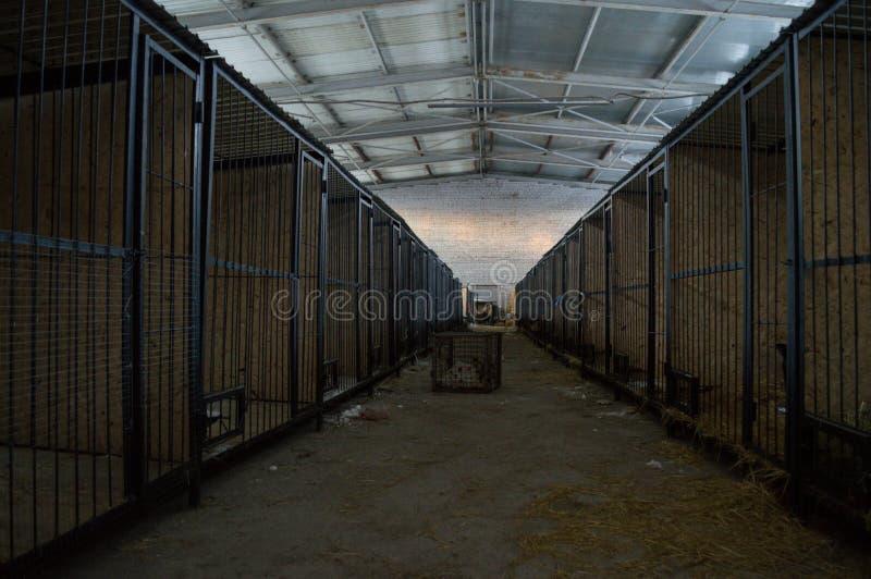 Kernels en un refugio de perros durante el invierno en Astaná, Kazajistán imagenes de archivo