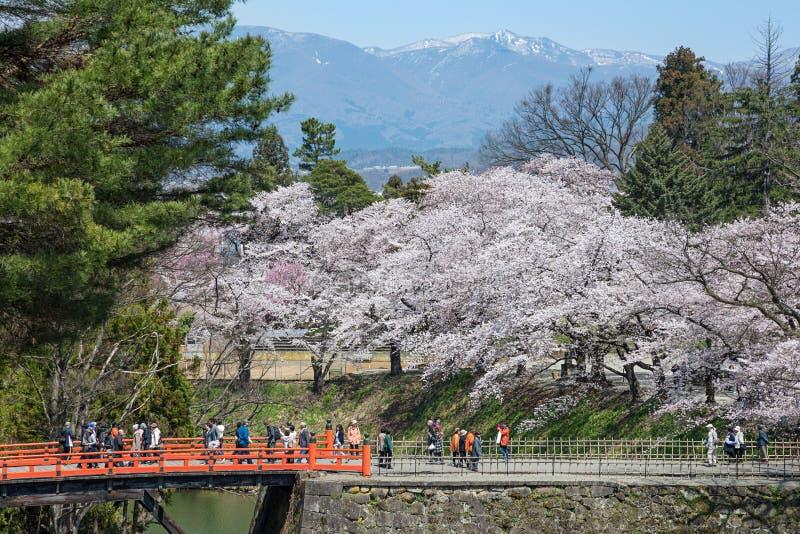 Kers-bloesem bomen in Tsuruga-kasteelpark royalty-vrije stock afbeeldingen