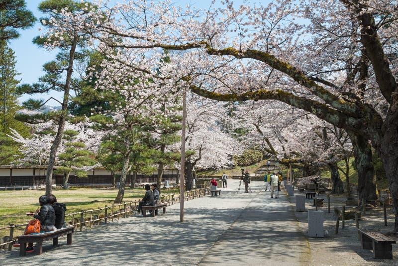 Kers-bloesem bomen in Tsuruga-kasteelpark royalty-vrije stock foto