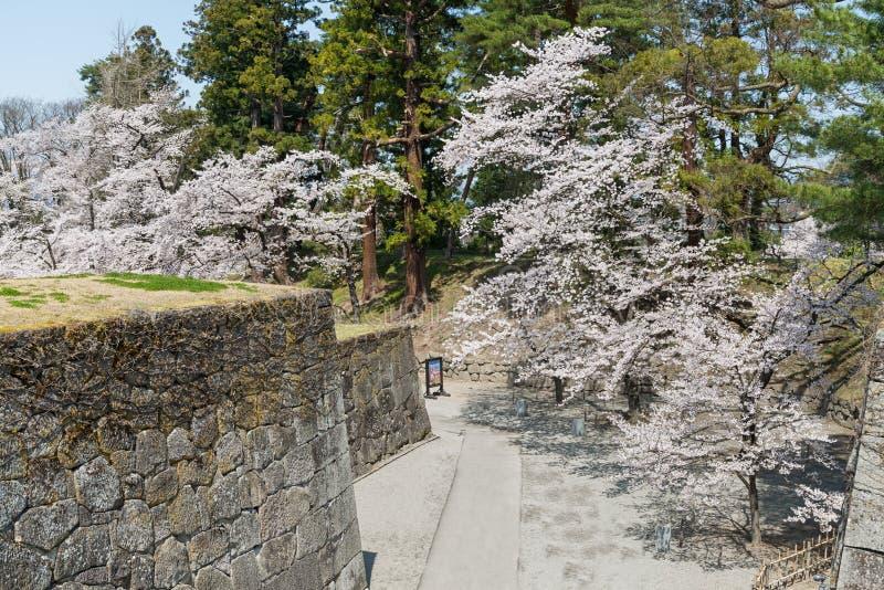 Kers-bloesem bomen in Tsuruga-kasteelpark royalty-vrije stock fotografie