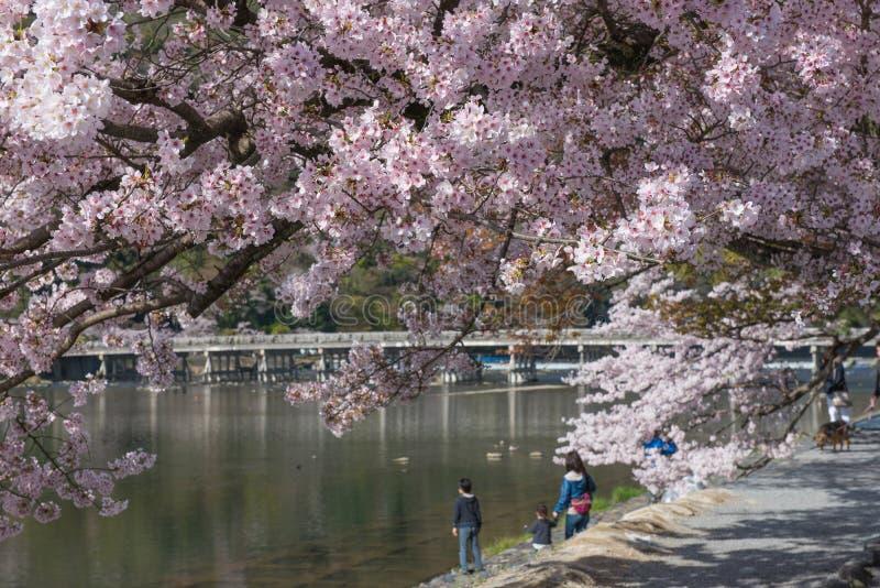 Kersenbloesem, Arashiyama in de lente, Kyoto, Japan stock afbeelding
