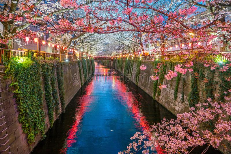Kersenbloesem bij Meguro-Kanaal in Tokyo, Japan royalty-vrije stock foto's
