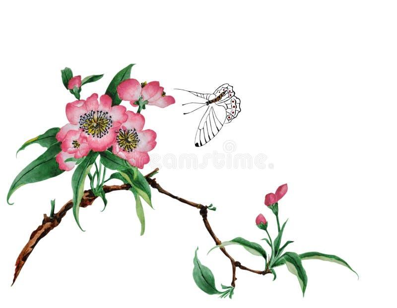 Kersenbloesem en een vlinder dichtbij royalty-vrije illustratie