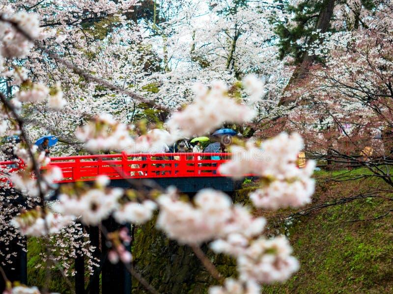 Kersenbloesem of Japanse bloeiende kers in Japan stock foto