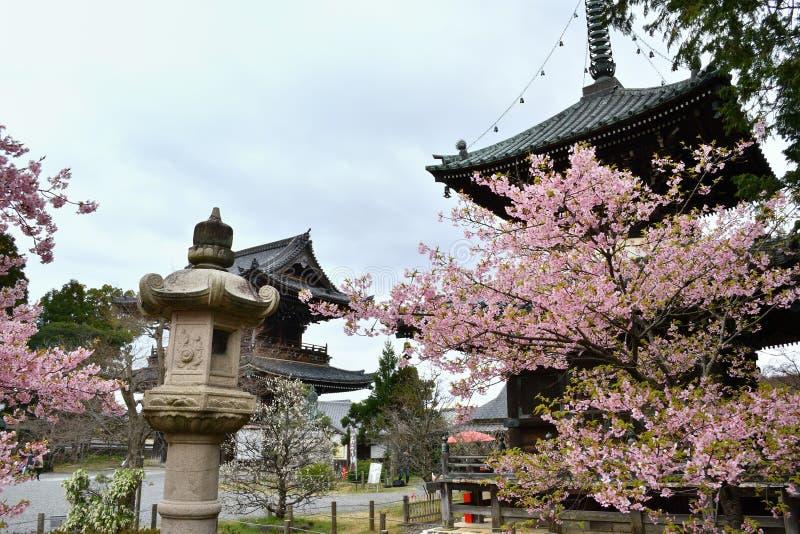 Kersenbloesem in tempel` s tuin, Kyoto Japan royalty-vrije stock foto