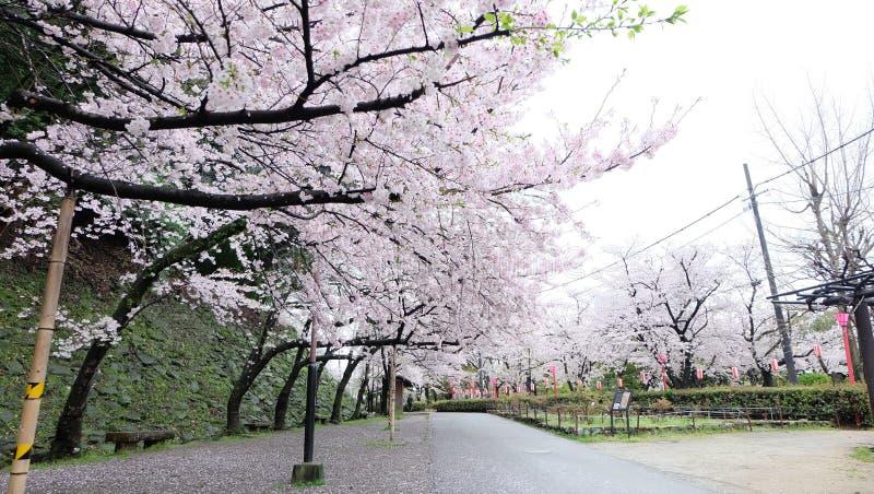 Kersenbloesem in Wakayama-Kasteel royalty-vrije stock afbeeldingen