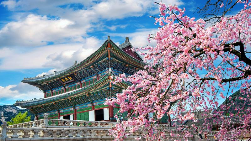 Kersenbloesems in de lente, Seoel in Korea royalty-vrije stock foto