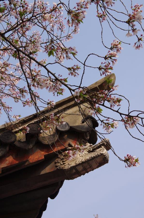 Kersenbloesems en Chinese architecturale details royalty-vrije stock foto's