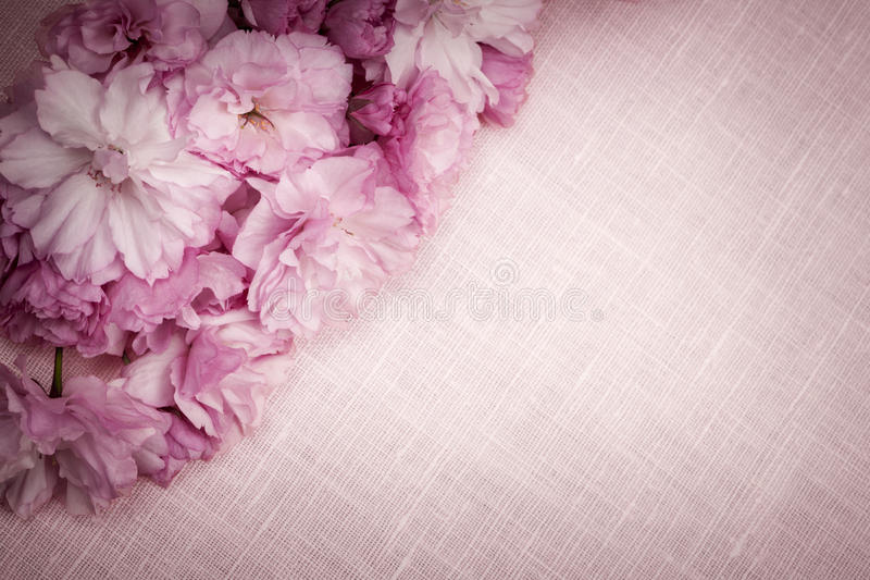 Kersenbloesems op roze linnen royalty-vrije stock afbeeldingen