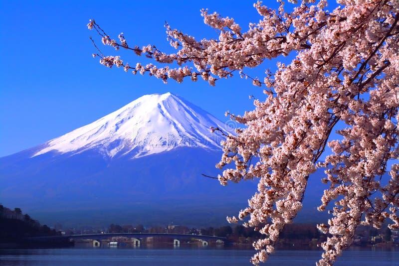 Kersenbloesems in volledige bloei van Meer Kawaguchi en MT Fuji in blauwe hemel stock foto's