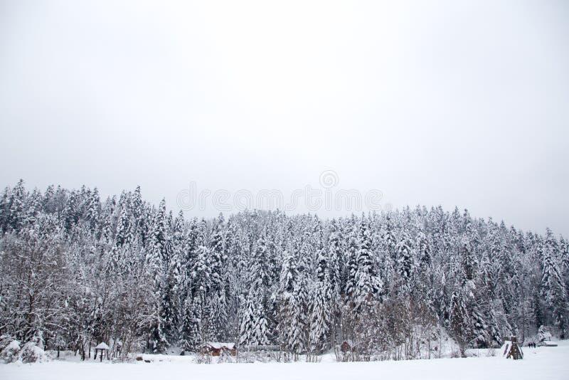 Kerstachtergrond met snowy filie-bomen Schitterend winterberglandschap royalty-vrije stock foto's