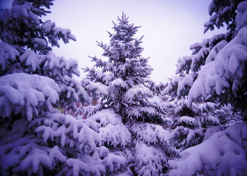 Kerstbomen onder Mooie Sneeuwdekking. De winterlandschap royalty-vrije stock fotografie