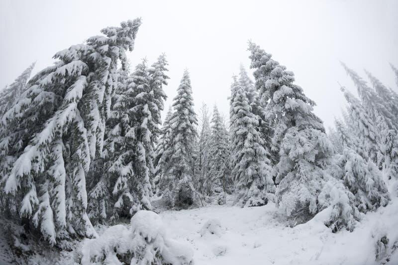 Kerstbomen standung lang in het koude weer stock foto