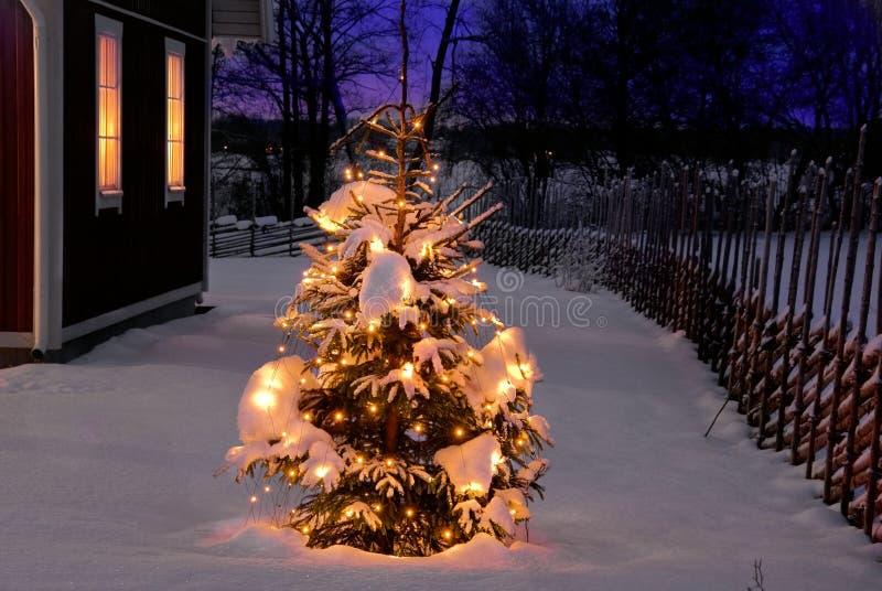 Kerstboom bij nacht royalty-vrije stock afbeelding