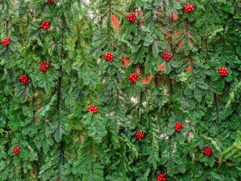 Kerstboom, DÃ ¼ sseldorf stock afbeelding