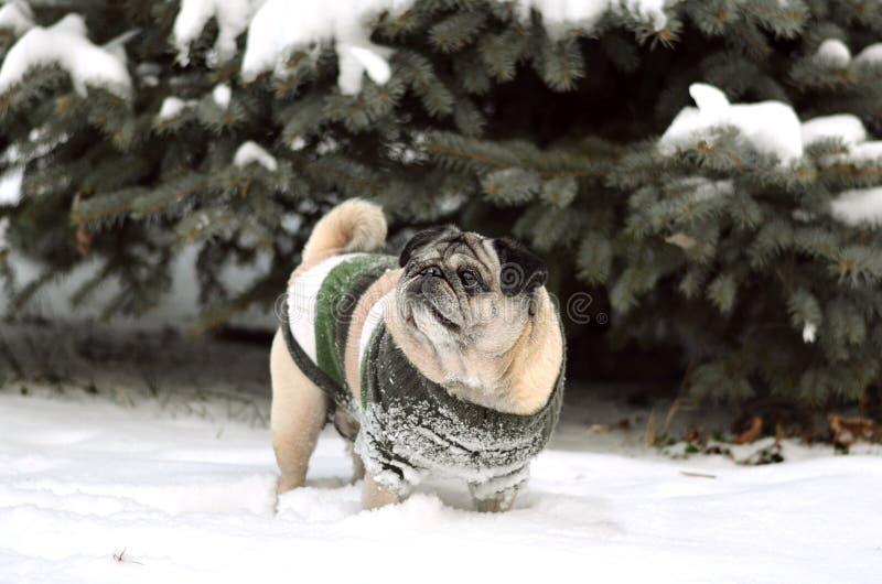 Kerstboom in de sneeuw en de druppeltjes van onder-sneeuw royalty-vrije stock afbeeldingen