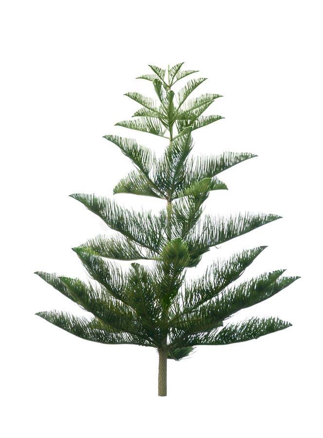 Kerstboom die op witte achtergrond wordt geïsoleerde royalty-vrije stock foto