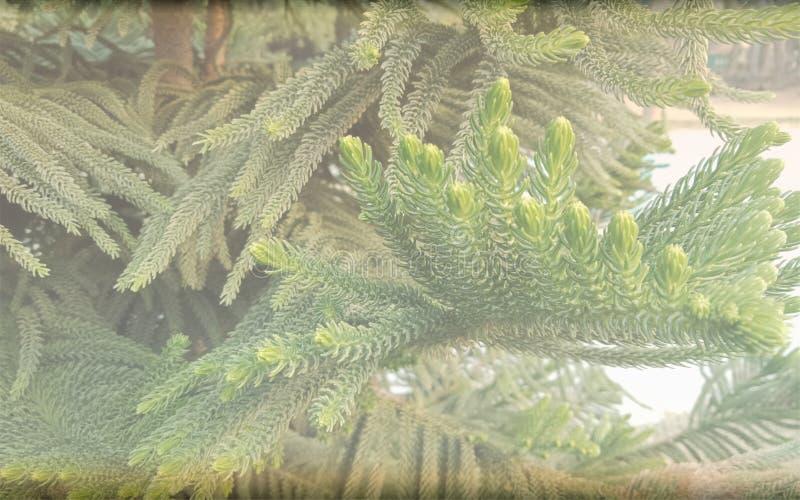 Kerstboom saai geweven malplaatje als achtergrond, abstract het malplaatjeontwerp van de informatiegrafiek royalty-vrije stock fotografie