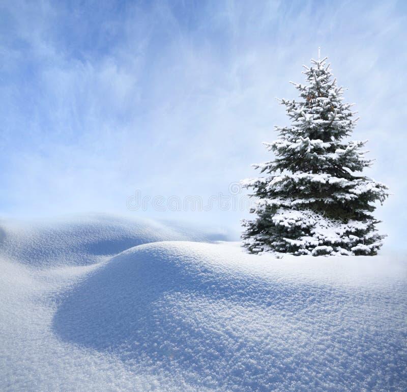 Kerstboom in sneeuw stock afbeelding