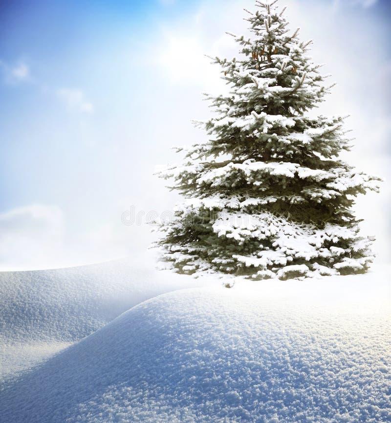 Kerstboom in sneeuw stock foto