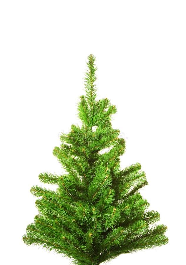 Kerstboom zonder decoratie royalty-vrije stock afbeelding
