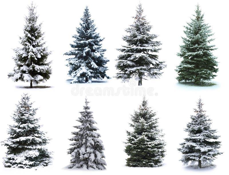 Kerstboomcollage stock fotografie