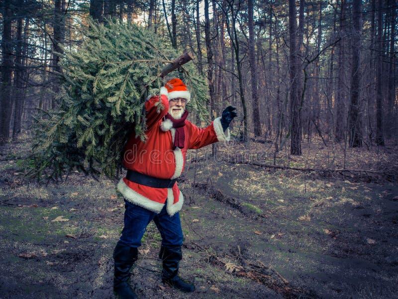 Kerstboomlevering Santa Claus met echte groene Kerstmis t stock fotografie