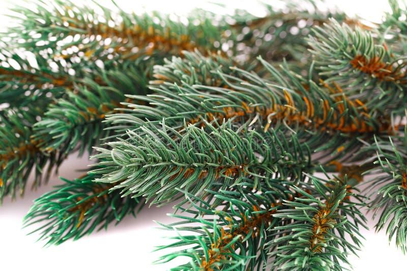 Kerstboomtak stock fotografie