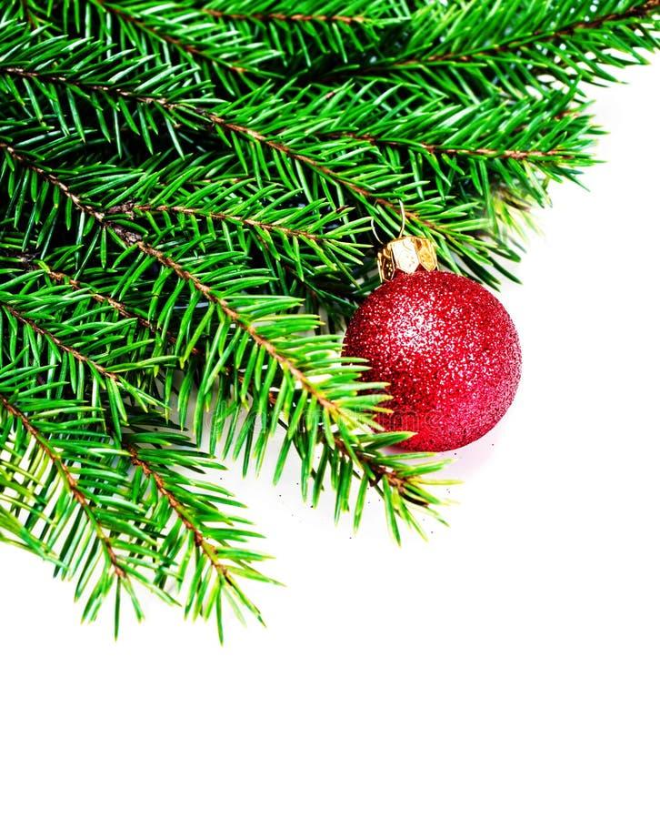 Kerstboomtak die op witte achtergrond met rode baub wordt geïsoleerd stock foto