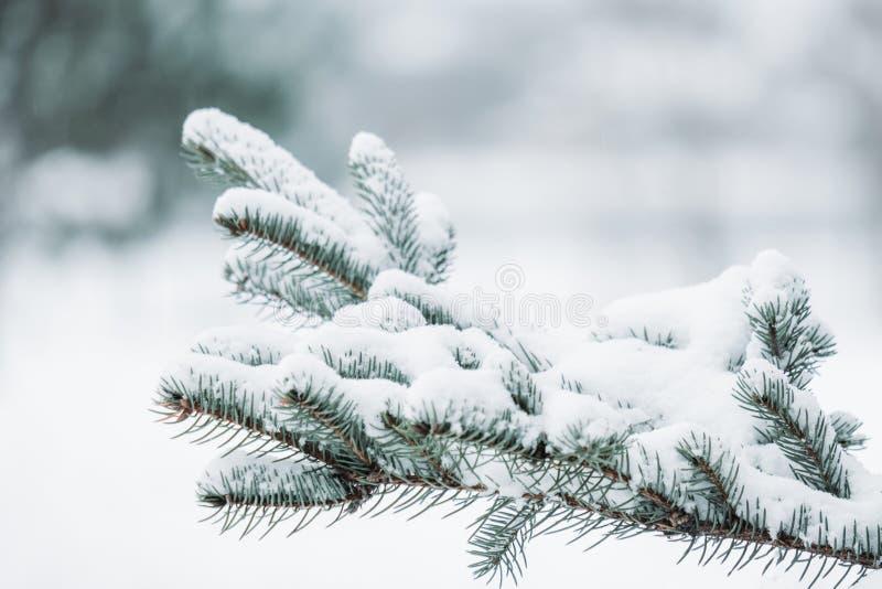 Kerstmis altijdgroene nette boom met verse sneeuw op wit Mooie wintertijdachtergrond stock fotografie