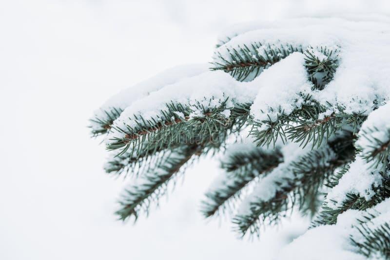 Kerstmis altijdgroene nette boom met verse sneeuw op wit Mooie wintertijdachtergrond stock foto