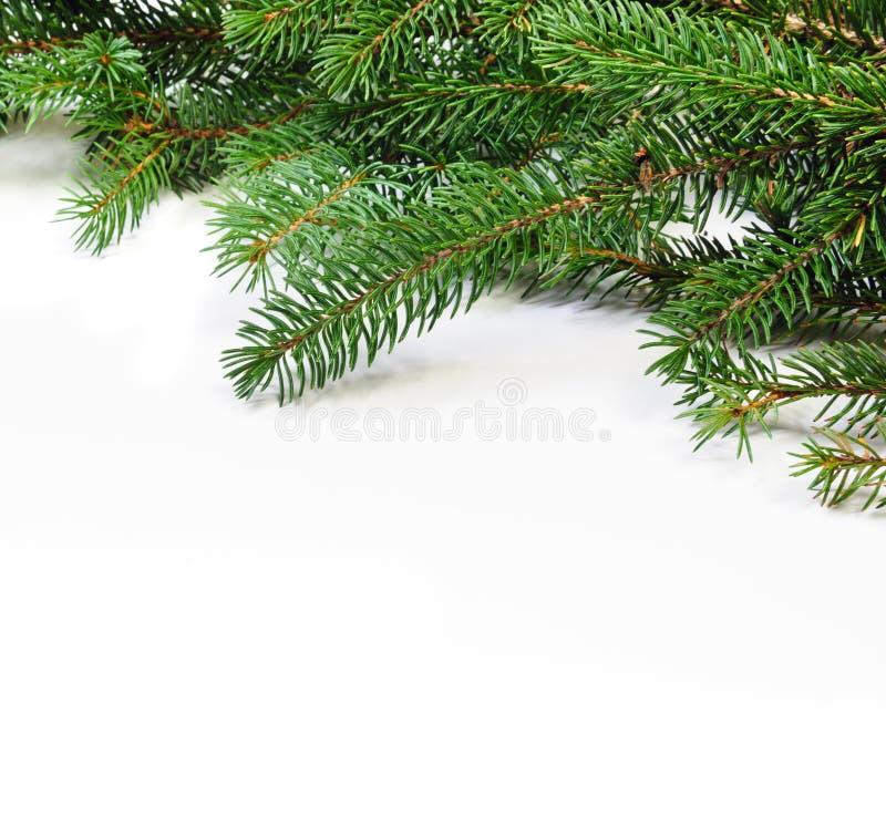 Kerstmis evengreen de takken van de pijnboomboom royalty-vrije stock foto's