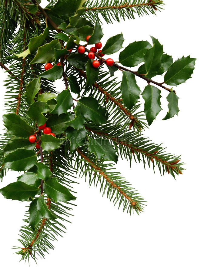 Kerstmis Evergreens royalty-vrije stock afbeeldingen