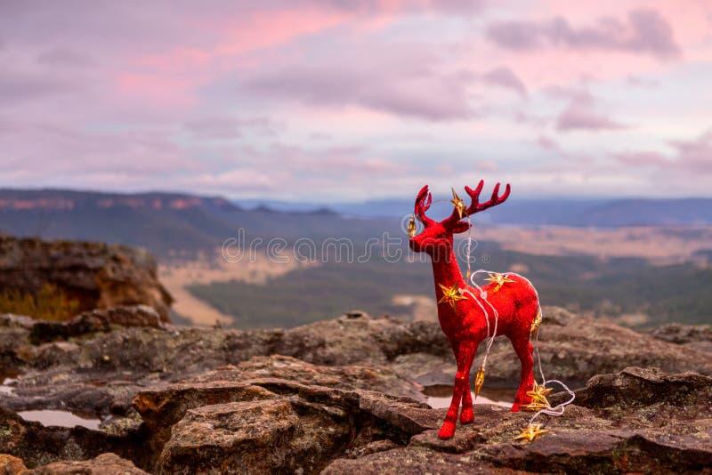 Kerstmis in Juli, Kerstmis in Blauwe Bergen Australië royalty-vrije stock afbeelding