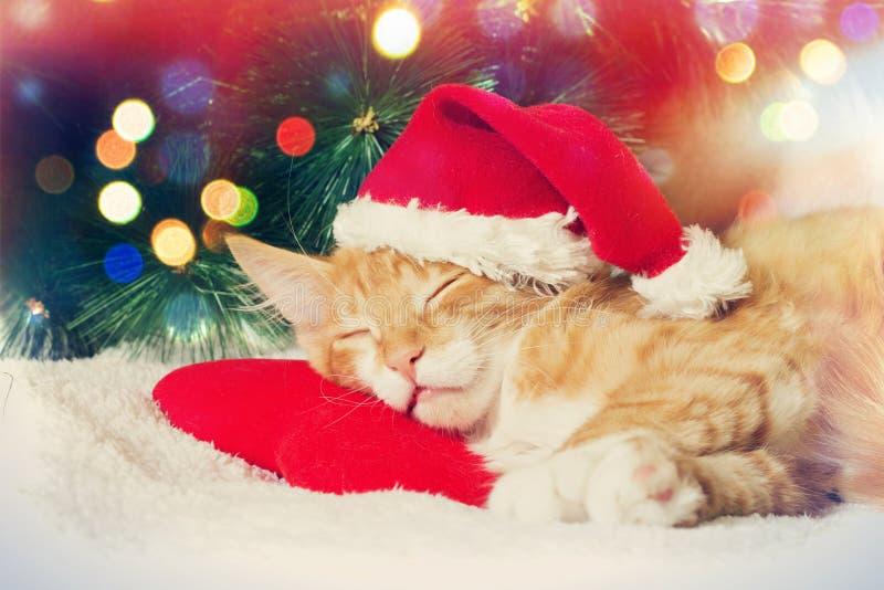 Kerstmis Kitten Sleeping royalty-vrije stock foto