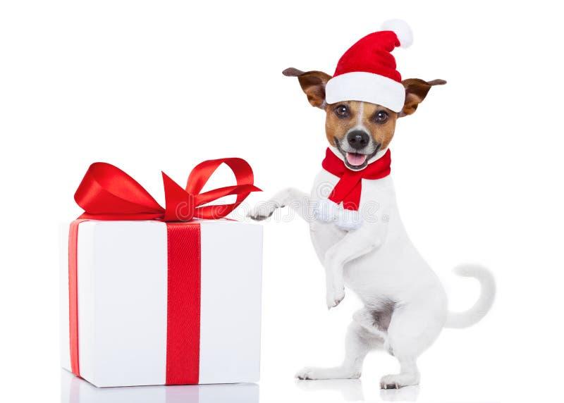Kerstmis Santa Dog royalty-vrije stock foto